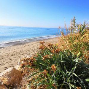 día mundial de la naturaleza 2020 las madrigueras playa