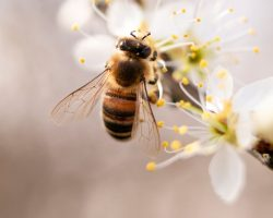 día mundial de la naturaleza 2020 abeja2