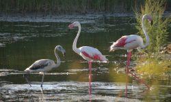 día-mundial-de-la-naturaleza-las-madrigueras-flamencos